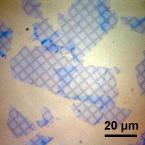 Nanoscopic Surface Architecture