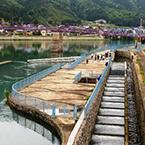 Environmental Disaster Mitigation Management