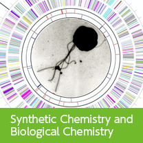 Synthetic Chemistry and Biological Chemistry