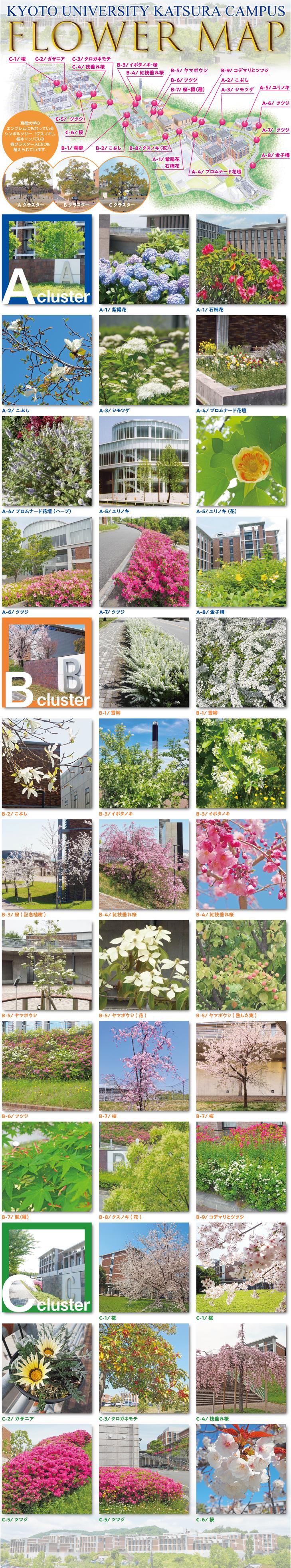 桂FlowerMap.jpg